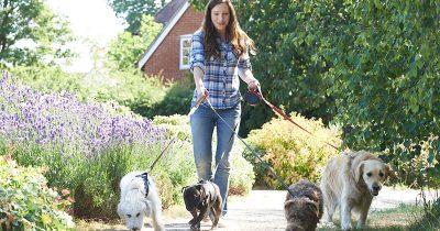 Pet Sitter Walking Dogs