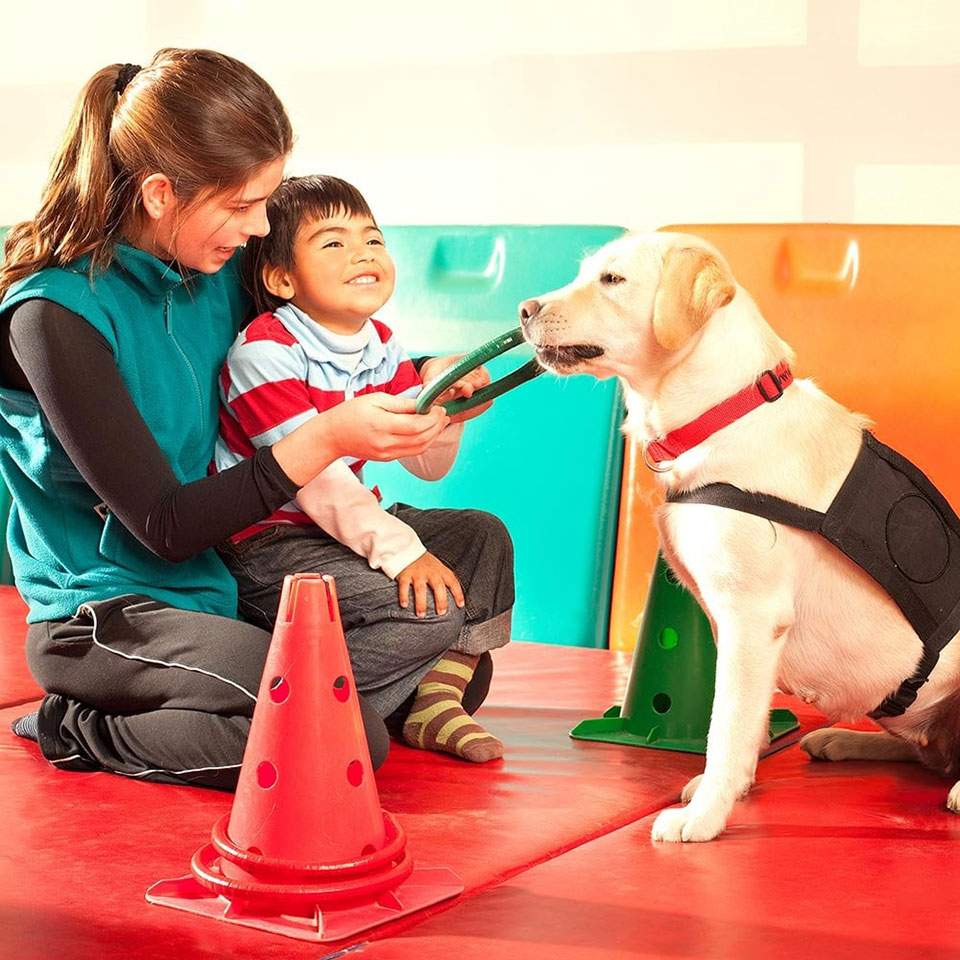 animal-assisted-therapy-diploma-course-4