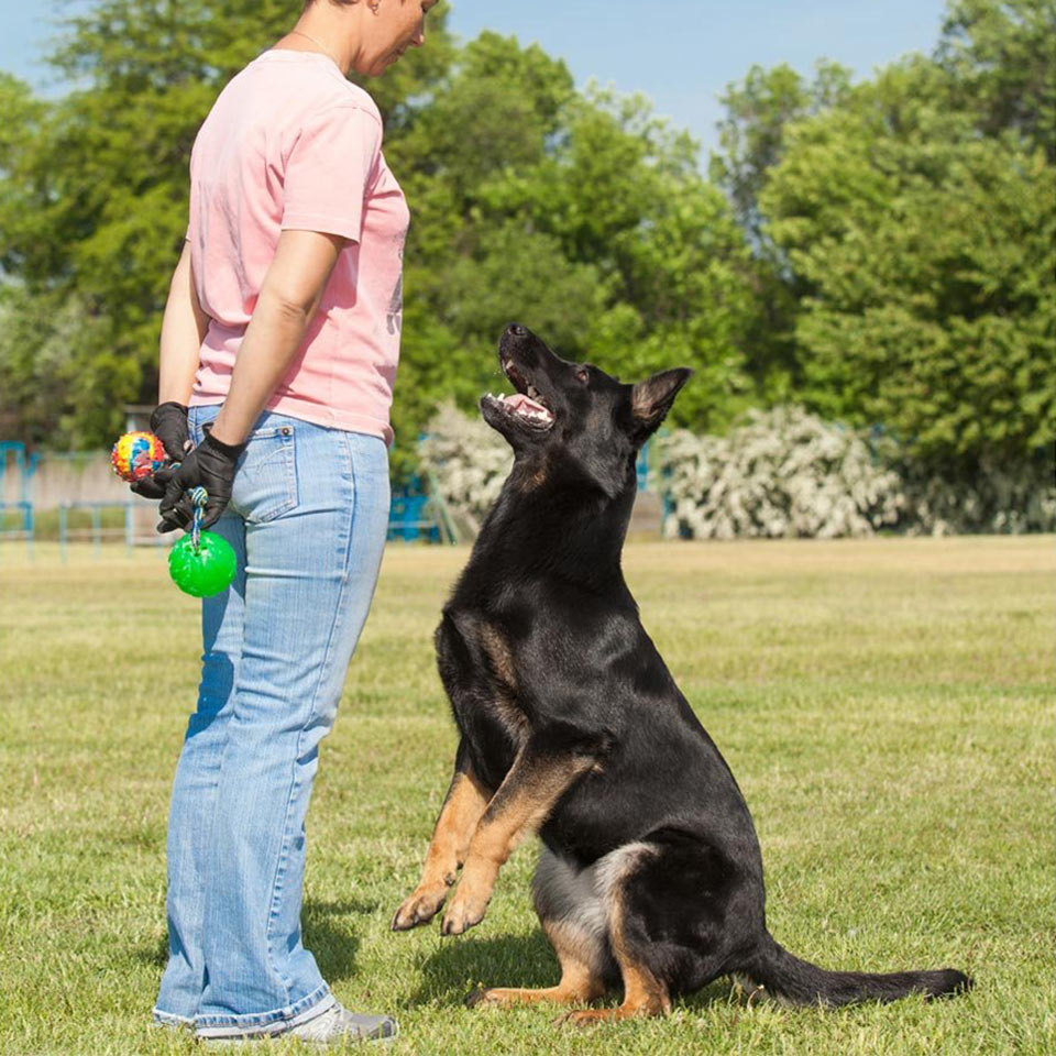 dog-training-diploma-course