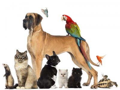 Pet Care Business Diploma Course