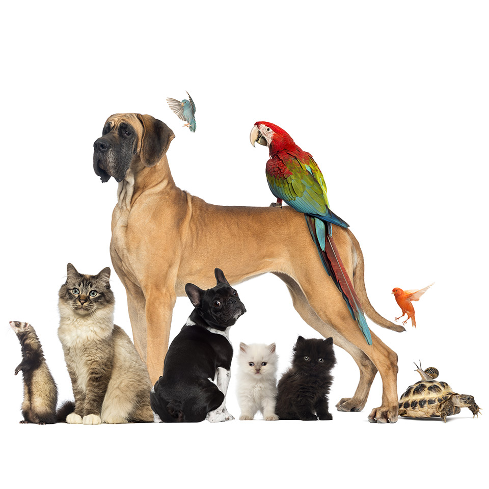 pet-care-business-diploma-course-1