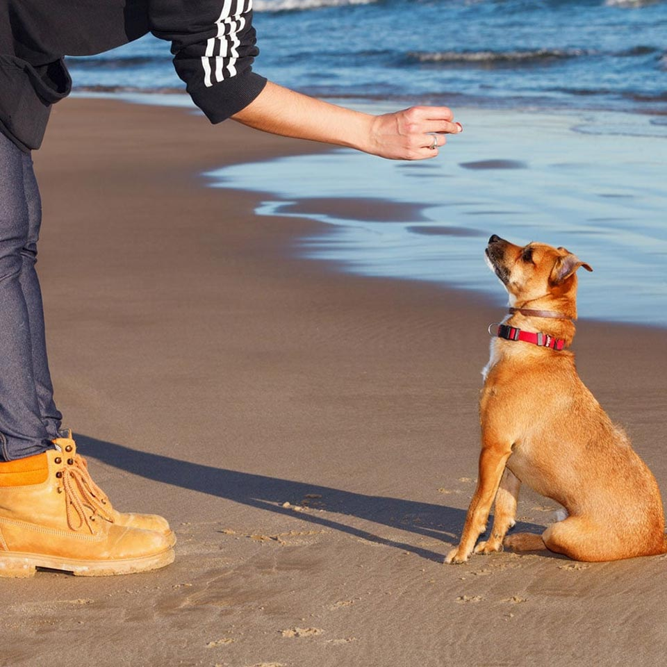puppy-training-diploma-course-1