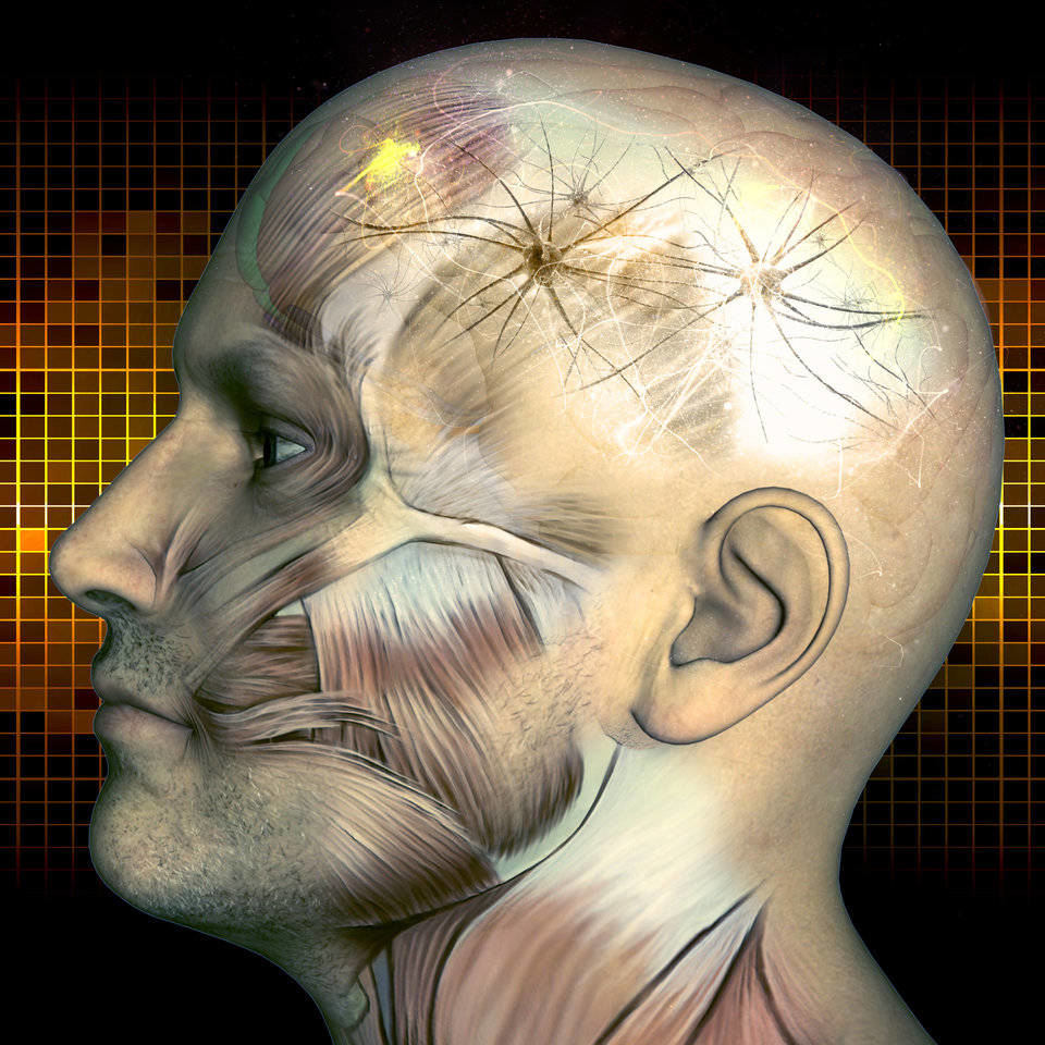 NLP Human Brain