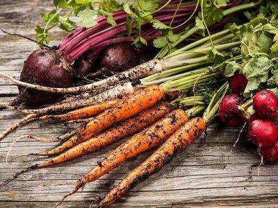 Organic Gardening Diploma Course