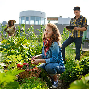 3 people tending to a community garden