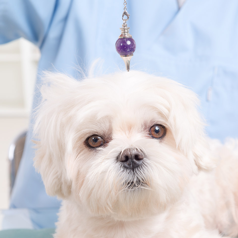 Dog receiving crystal healing with crystal pendant