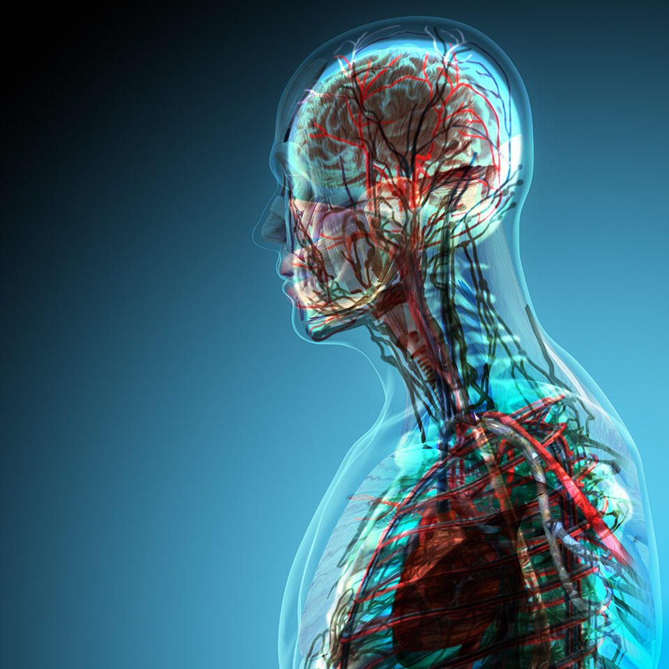 Exelent Online Course For Anatomy And Physiology Photos - Human ...