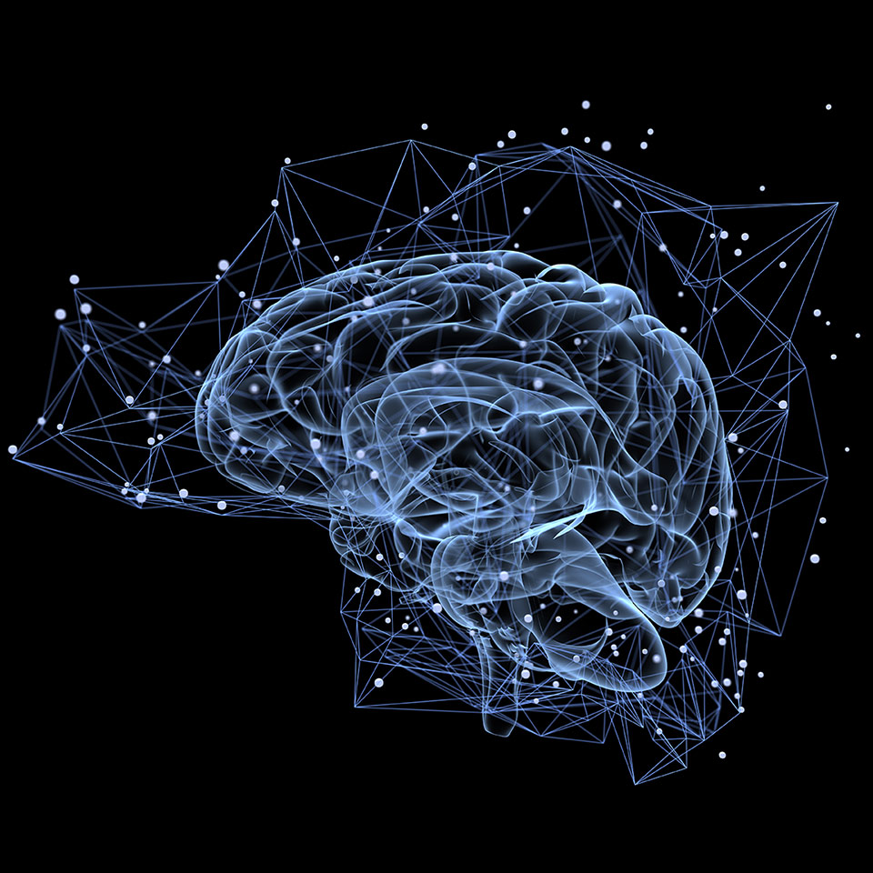 Image of a brain showing brain activity