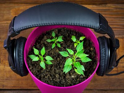 Gardening Podcast – Listening in the Garden