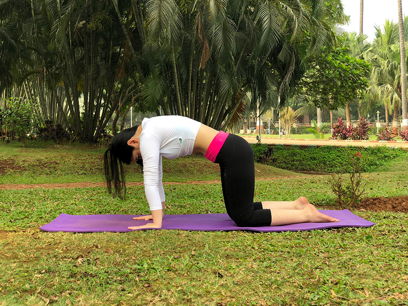 ] for Back Pain - Cat Pose