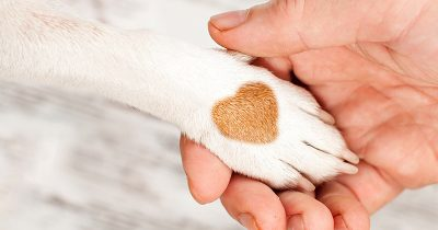 Dog's paw, with heart pattern in the fur, in a man's hand, showing the care therapy dogs can give to people