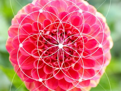 Fibonacci Numbers and the Golden Ratio Diploma Course