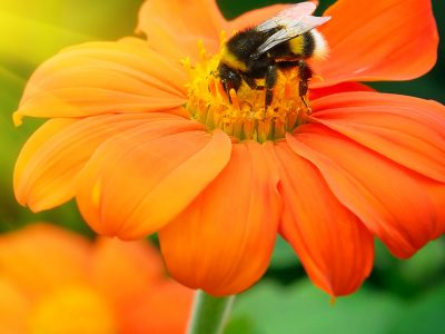 Natural Beekeeping Diploma Course