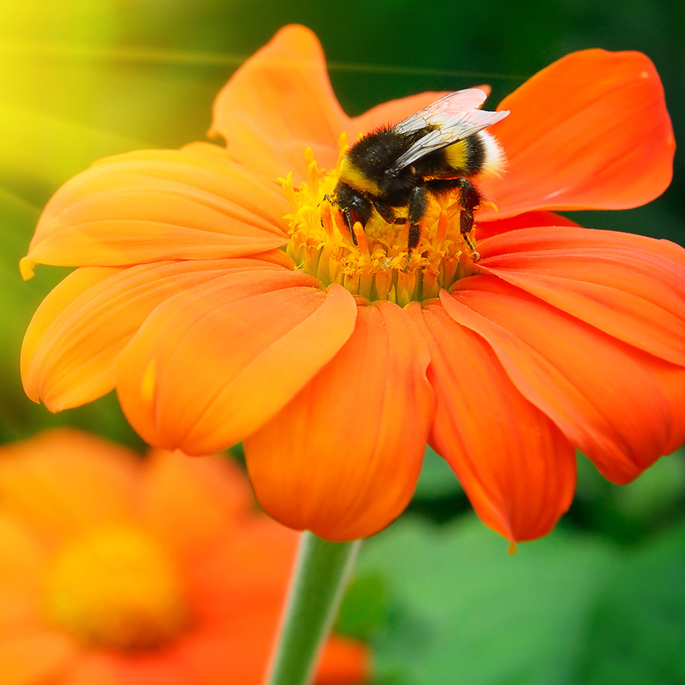 Natural Beekeeping Diploma Course