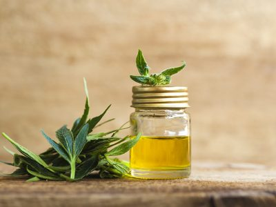 A medicinal cannabis plant and a jar of CBD oil