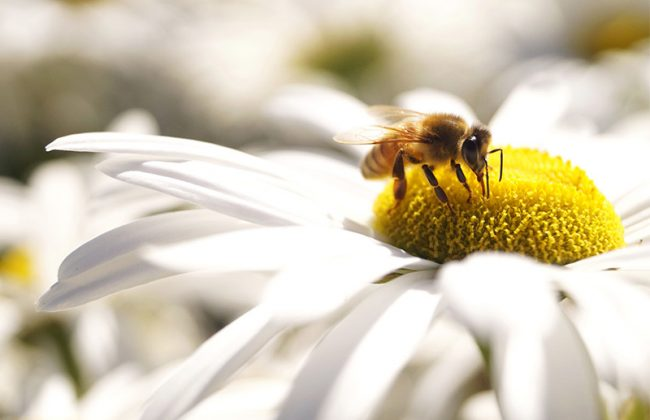 Why Being a Beekeeper Could be the Most Important Job on the Planet