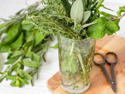 Indoor Herb Garden: 10 Herbs You Can Grow in Water