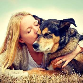 Animal Welfare Diploma Course