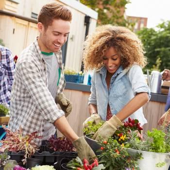 Urban Food Gardening Diploma Course