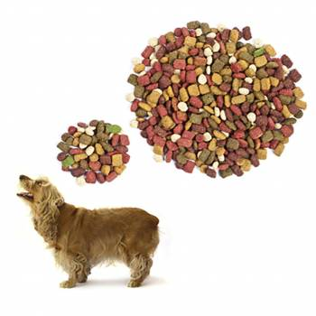 Canine Nutrition Diploma Course