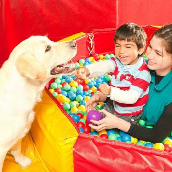 Animal Assisted Therapy Diploma Course