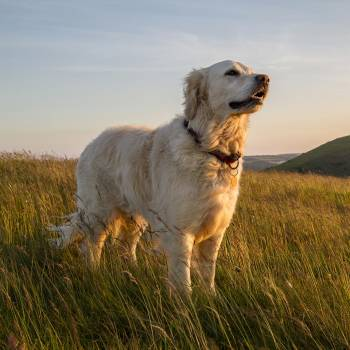 Canine Holistic Health & Therapy Diploma Course