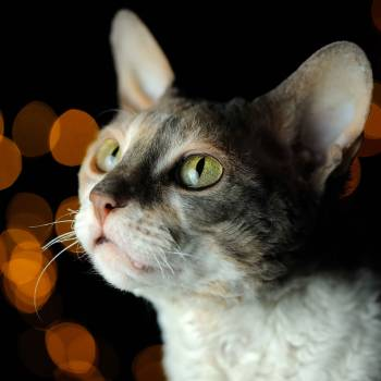 Crystal Healing for Animals Diploma Course