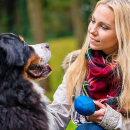 Canine Behaviour Training Diploma Course
