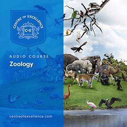 Zoology Audio Course