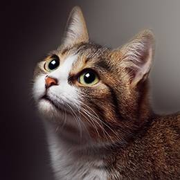 Understanding Feline Anxiety Diploma Course
