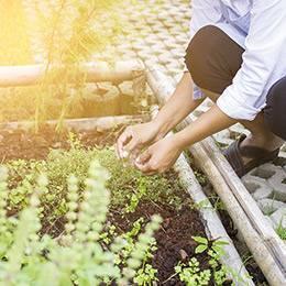 Herb Gardening Diploma Course