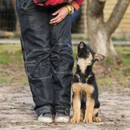 Puppy Training Diploma Course