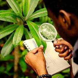 Botany Diploma Course