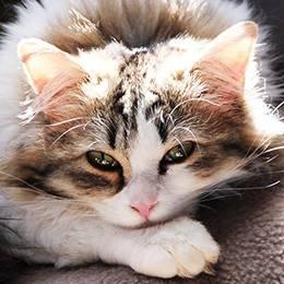 Feline First Aid Diploma Course