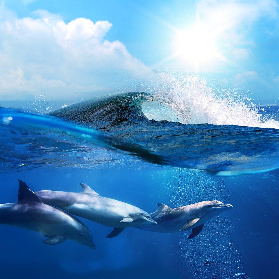 Dolphins playing in the ocean under a breaking wave