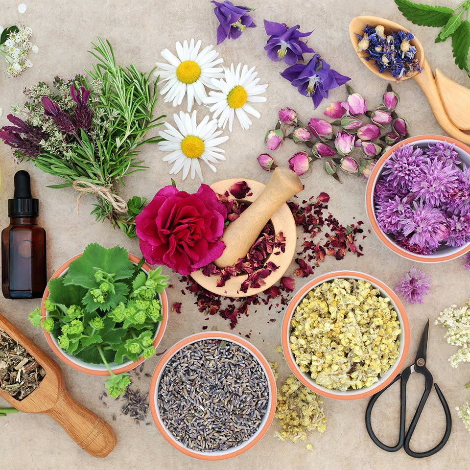 Natural herbal medicine with fresh herbs and flowers, aromatherapy essential oils, mortar with pestle and scissors on hemp paper background