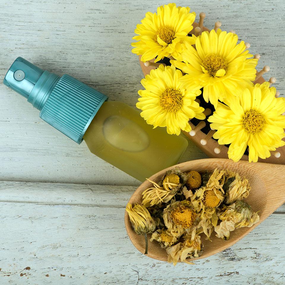 Hydrosol in a spray bottle alongside fresh and dried chrysanthemum flowers
