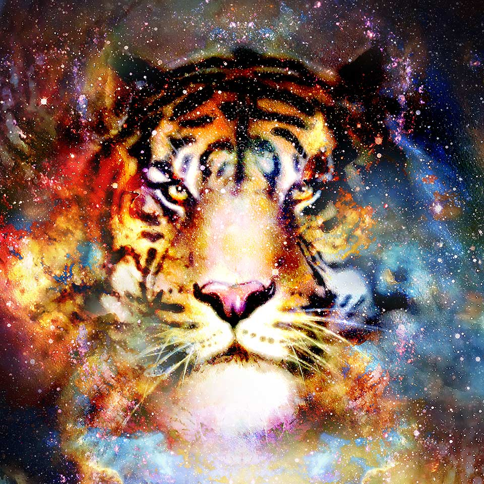 Tiger spirit animal in a cosmetic setting