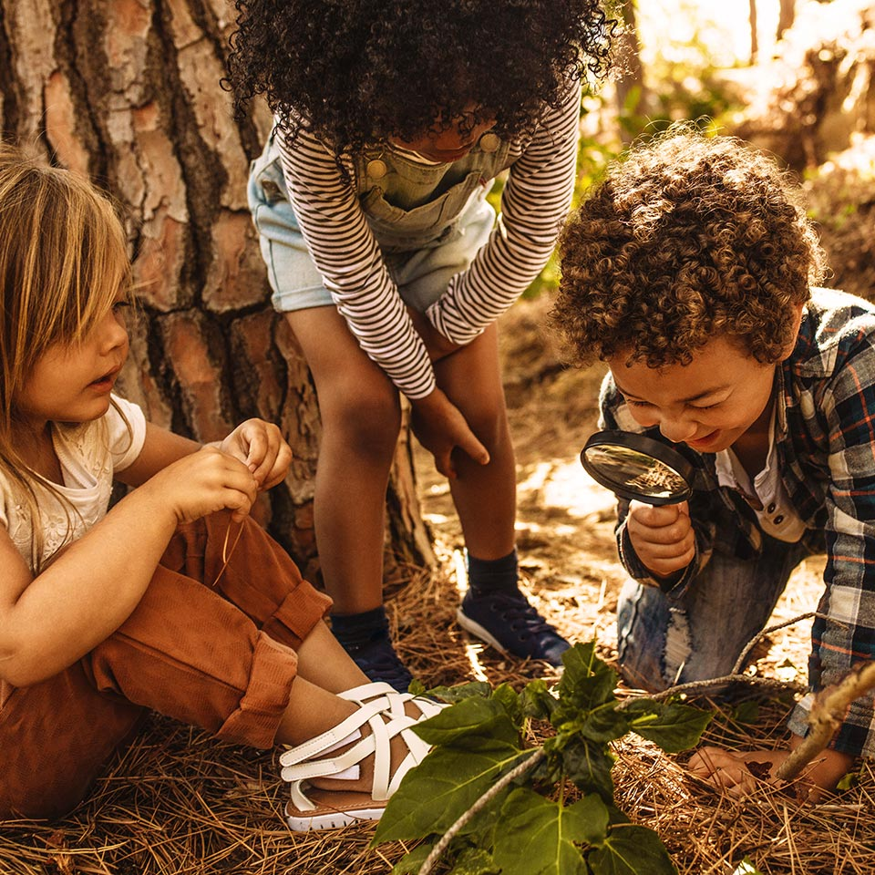 Children in forest looking at leaves through a magnifying glass