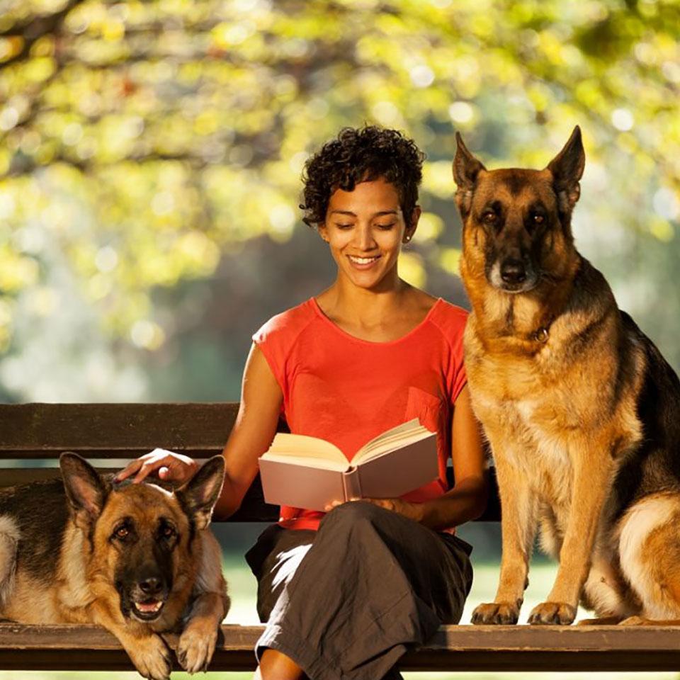 canine-behaviour-training-course-2