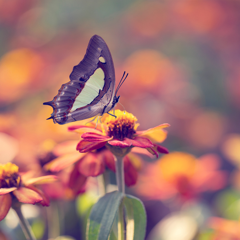 Close up image of a butterfly on a flower