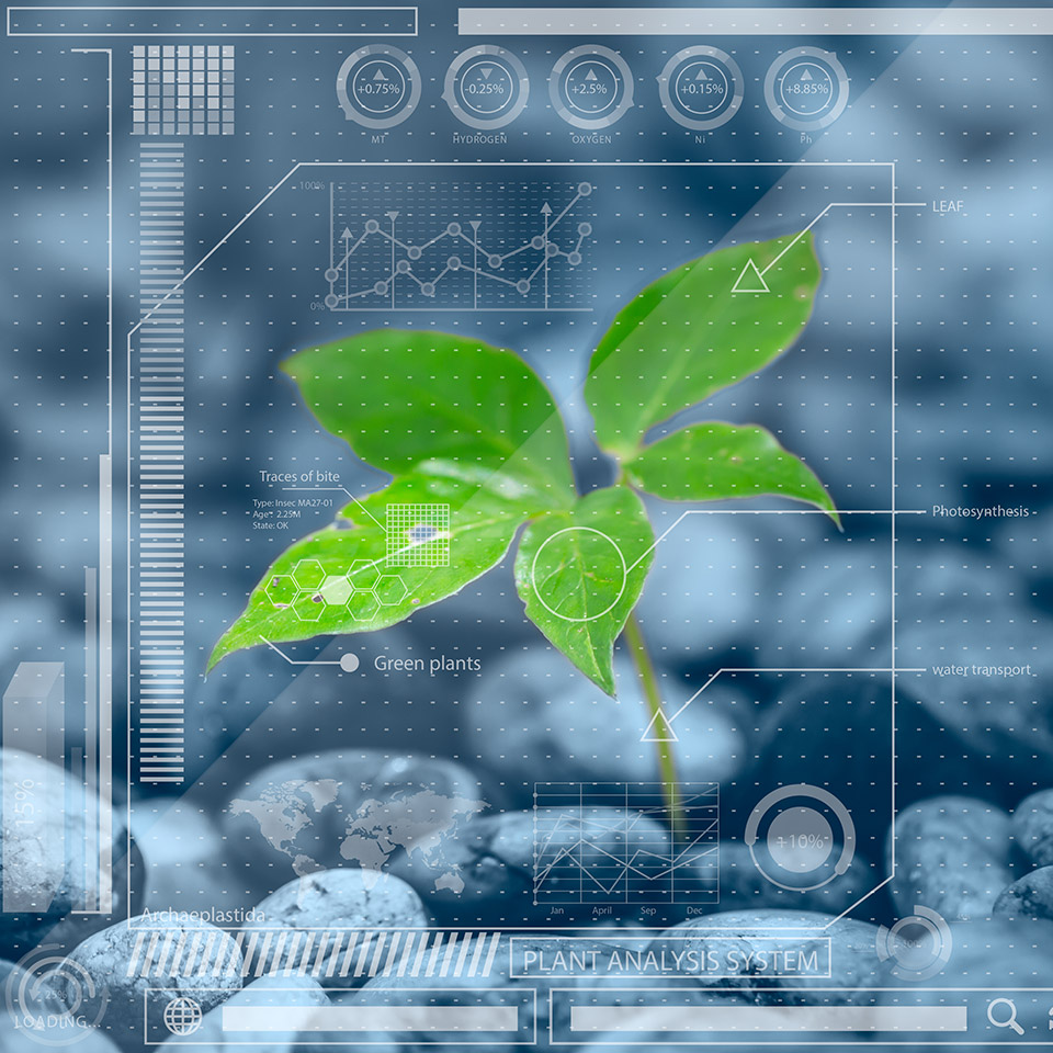 Plant with an overlay of analytical information