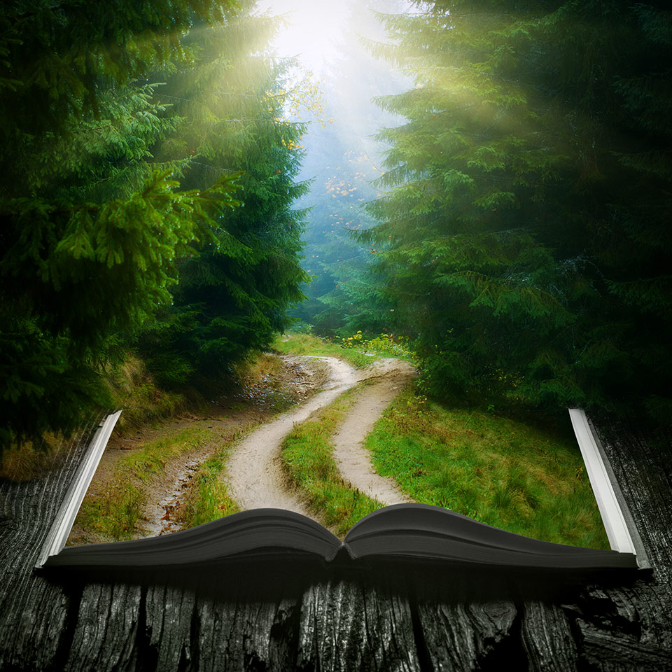 An open book that is merging with a forest