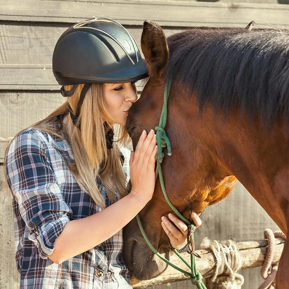 Horse Care & Management Diploma Course