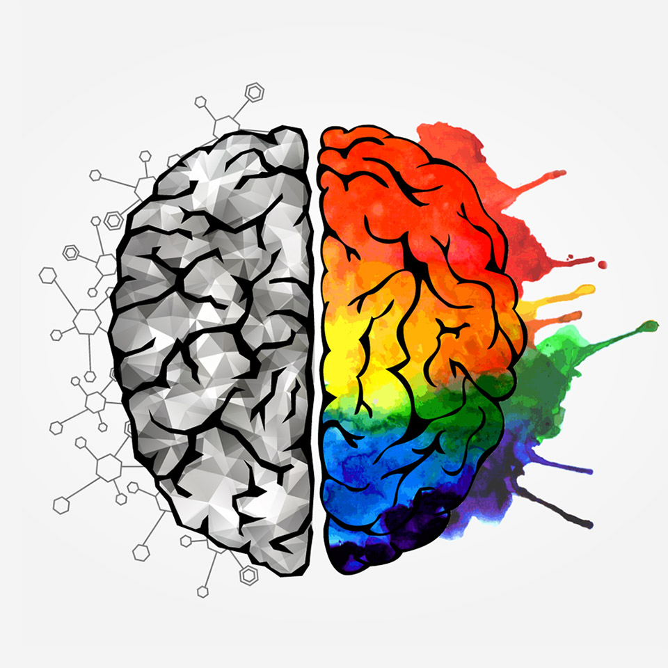Illustration of a brain showing the left side as logical and the right as creative